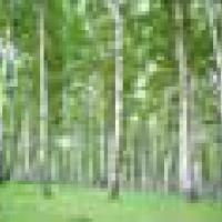 Миргородські лісівники протягом року посадили 1 млн. 32 тис. штук сіянців